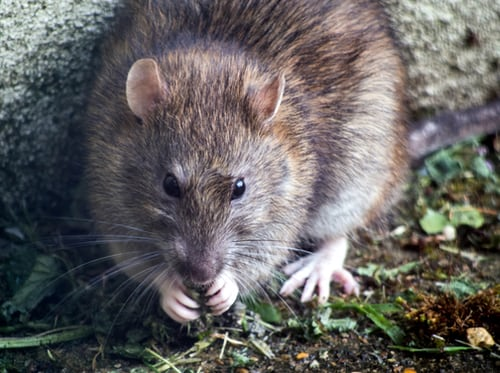 Why choosing pest control professionals is a wise decision to make?