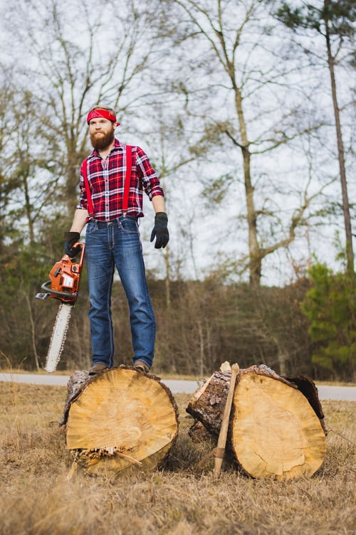 Potential benefits From Tree Removal Services Is a Must Read